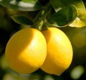 lemon-banner-new